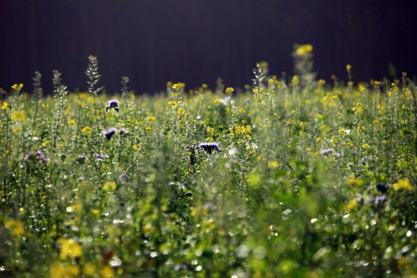 fiori per le api