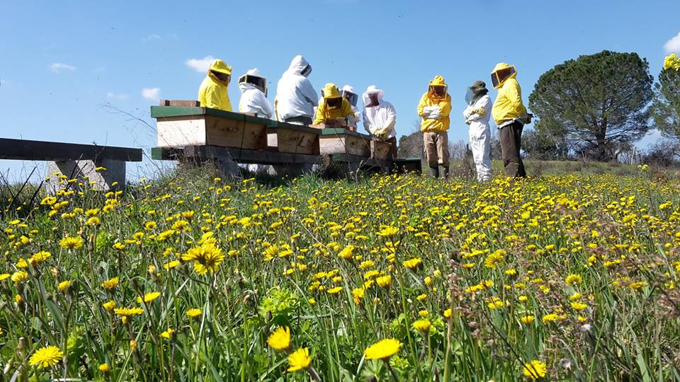 kenya top bar corso apicoltura
