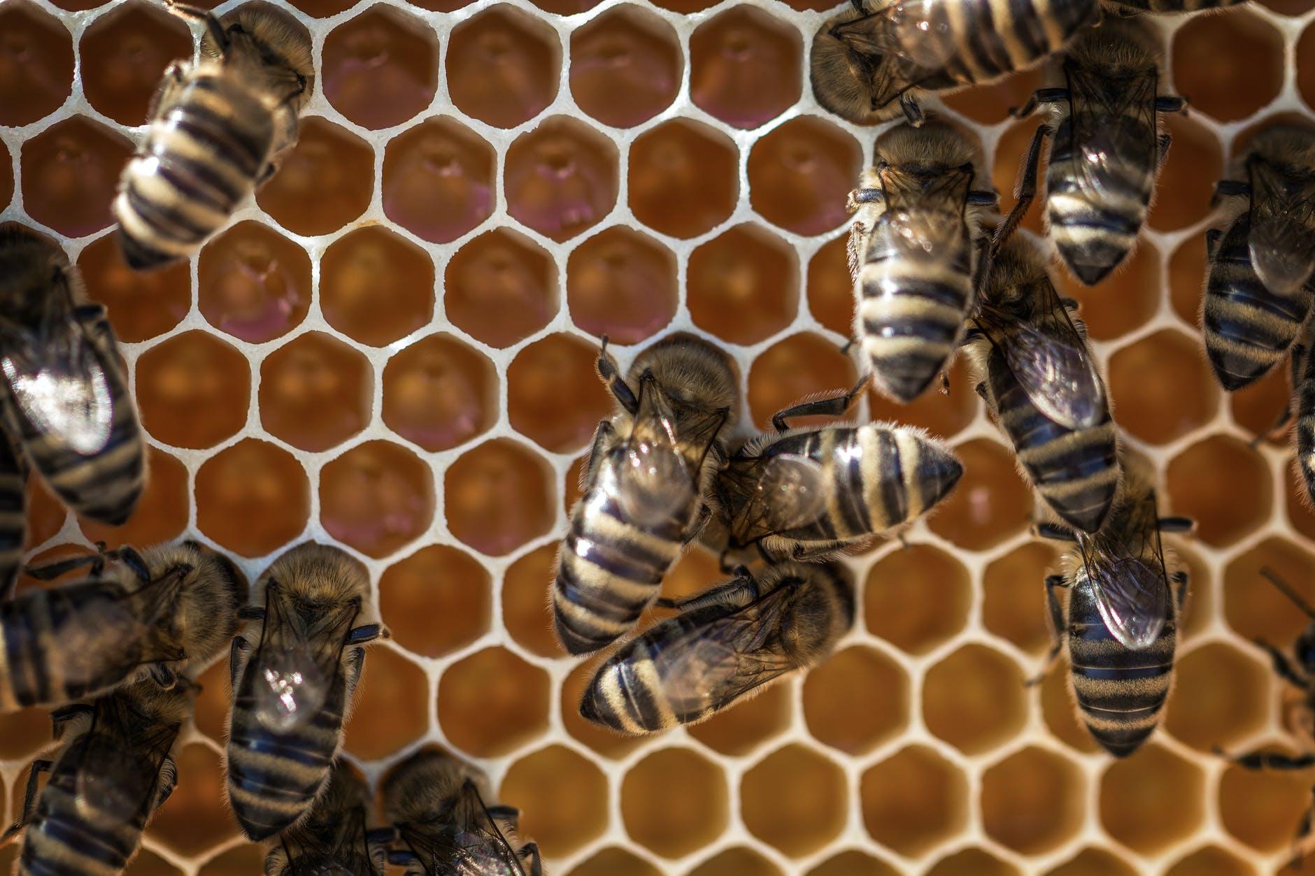 animals apiary beehive beekeeping api